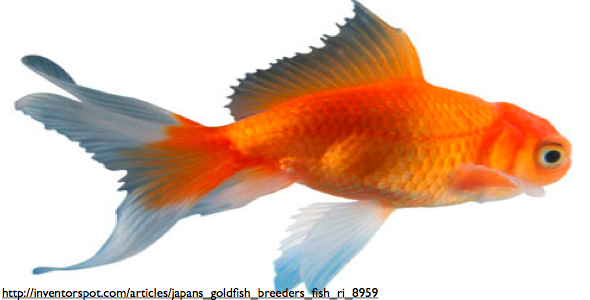 How Is the Circulation and Behavior of a Fish Effected by Toxins in Its Environment?