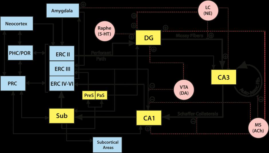 hippo_network