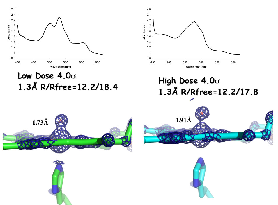 On the left is the electron density map of CCP Compound I obtained from several  crystals where no crystal was exposed for more than 10 seconds. Single crystal spectroscopy showed that with such low exposure the crystals were no more than  10% reduced in the x-ray beam. The Fe-O bond length is 1.73Å which agrees well with EXAFS and Raman data demonstrating that the the iron is Fe(IV)=O and  not Fe(IV)-OH as previously deduced from x-ray structures. On the right is the  electron density map after after extensive x-ray exposure.