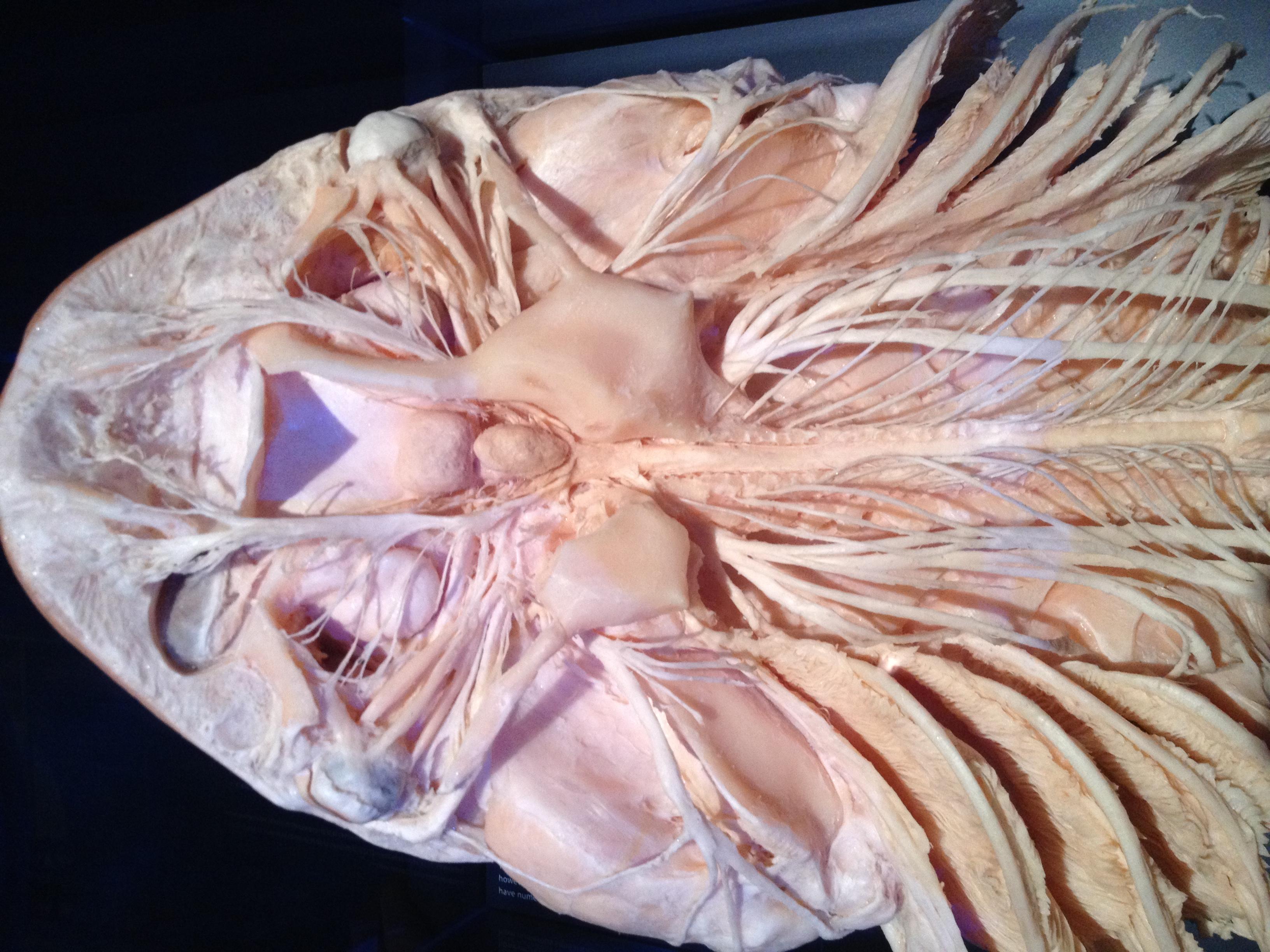 Fish Nervous System