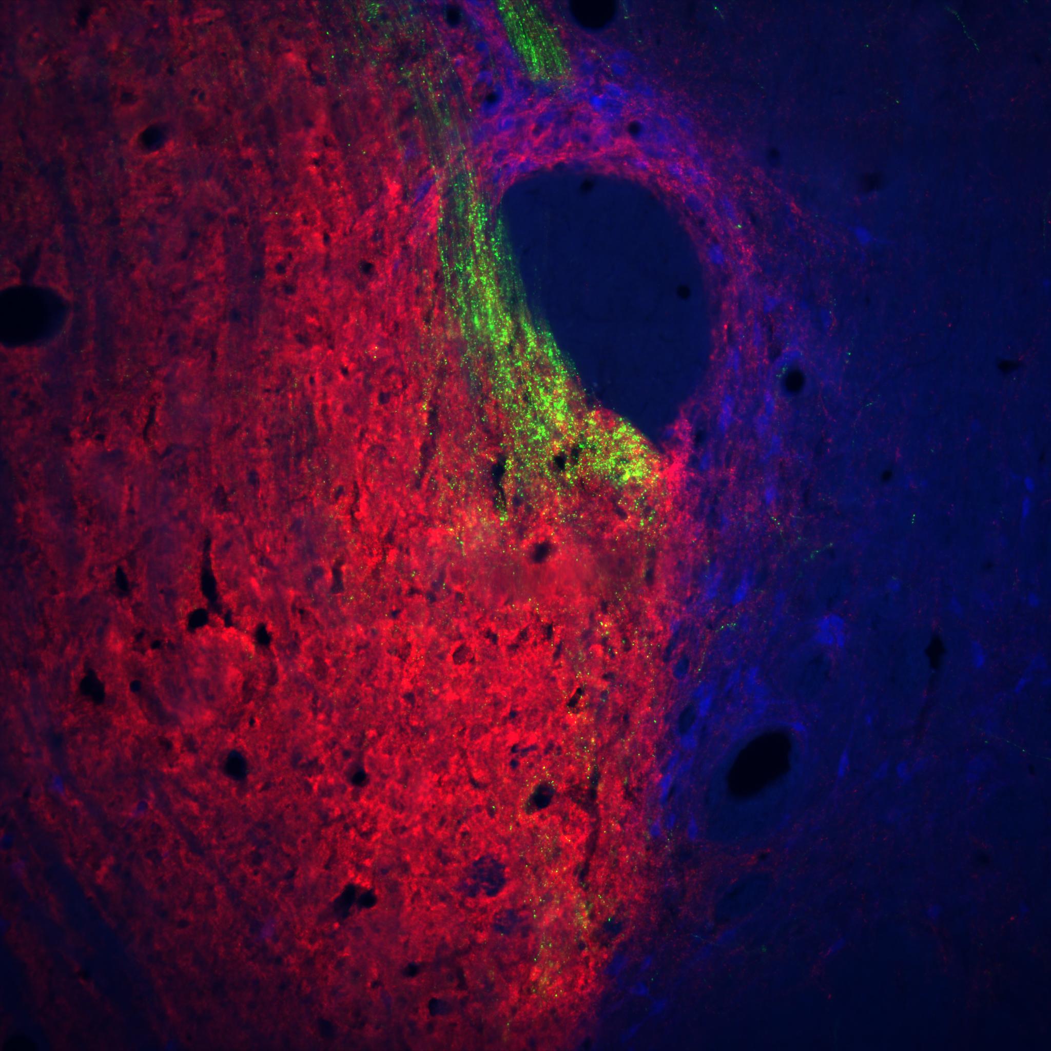 Neural Palette