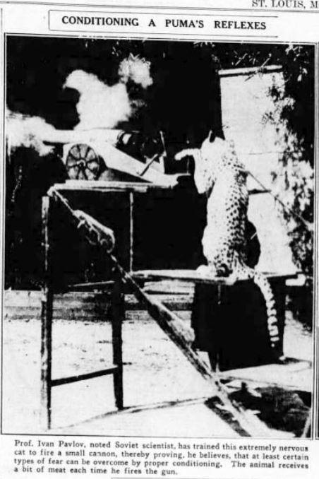 Pavlov Training a Cheetah
