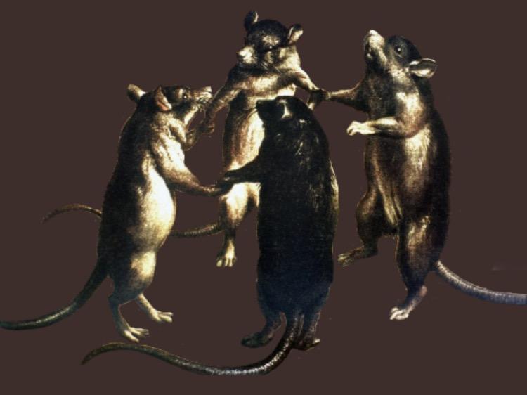 Dancing Rats