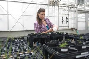 Plant responses to mycorrhizal fungi