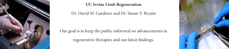 UC Irvine Limb Regeneration