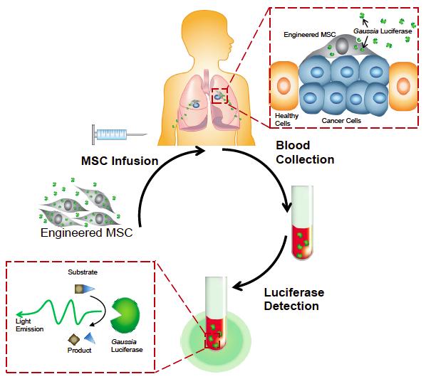 MSC for cancer detection
