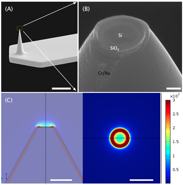 Coaxial Atomic Force Microscope Probes for Dielectrophoresis of DNA