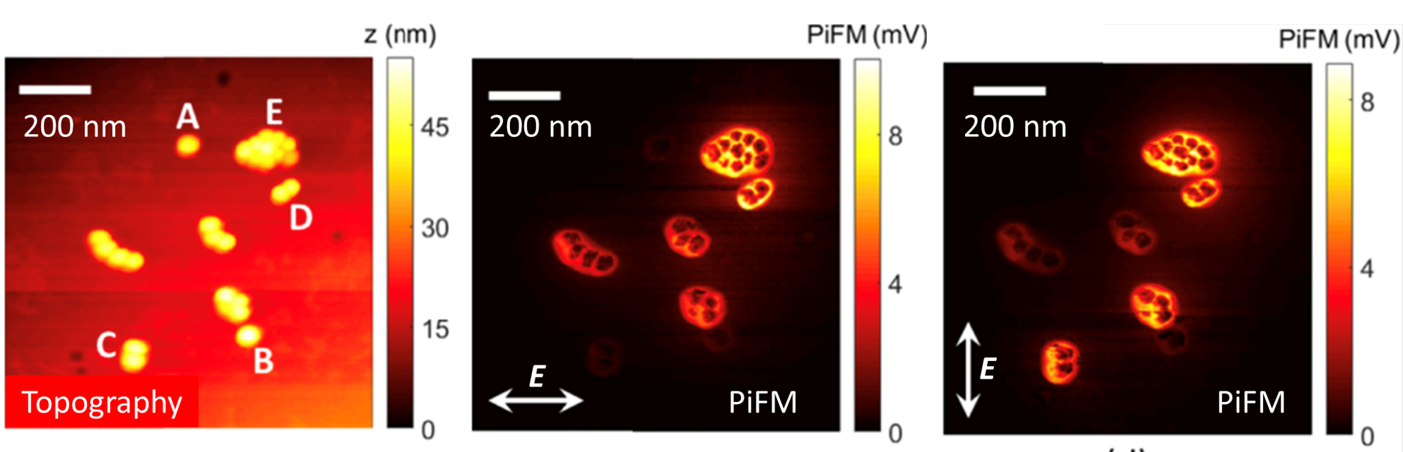 Mapping the near fields of the Au nanoparticles with PiFM
