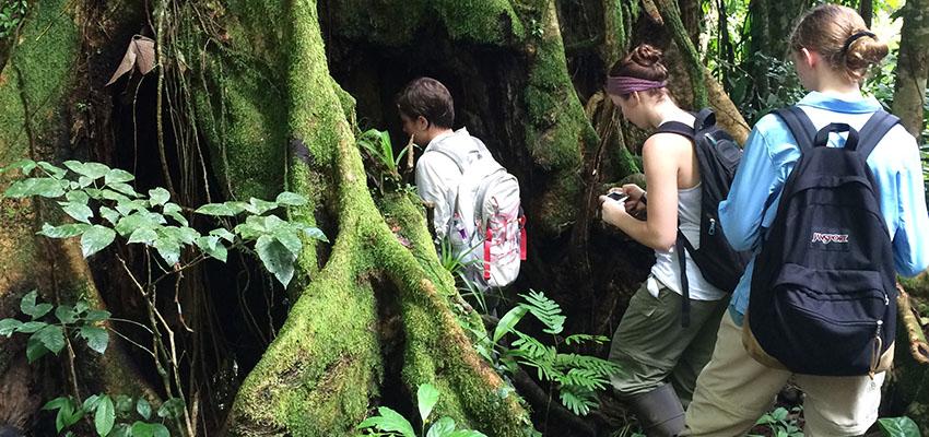 costa rica hollowed tree