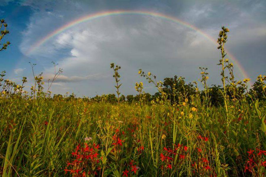 rainbow at prairie