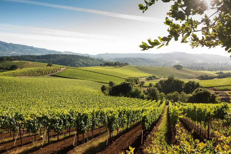 landscape view of vineyard