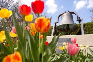 Bell Quad flowers