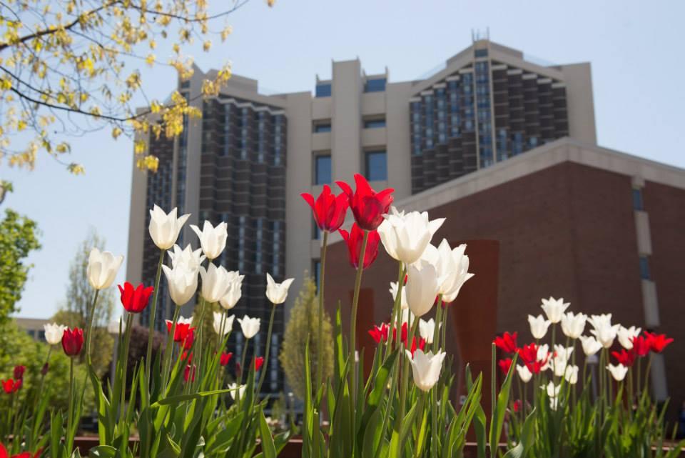 Watterson Towers flowers