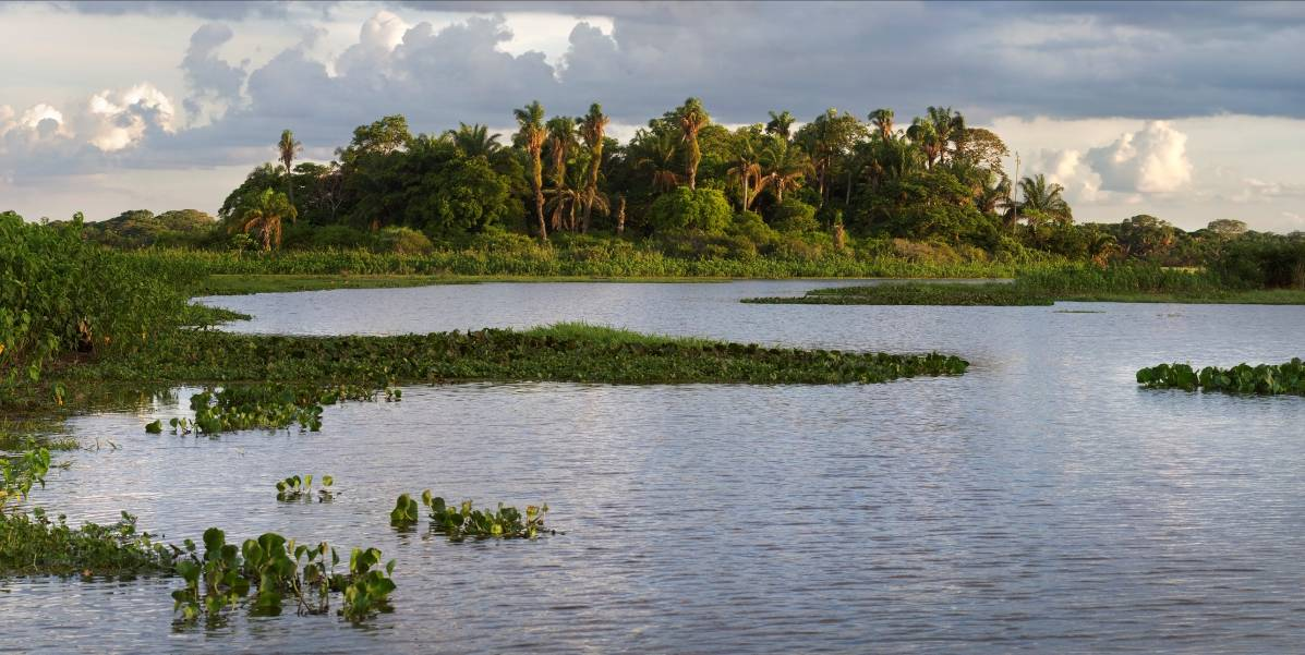 "image of The Barba Azul Nature Reserve includes wetland, savannah and palm forest ""island"" habitats."