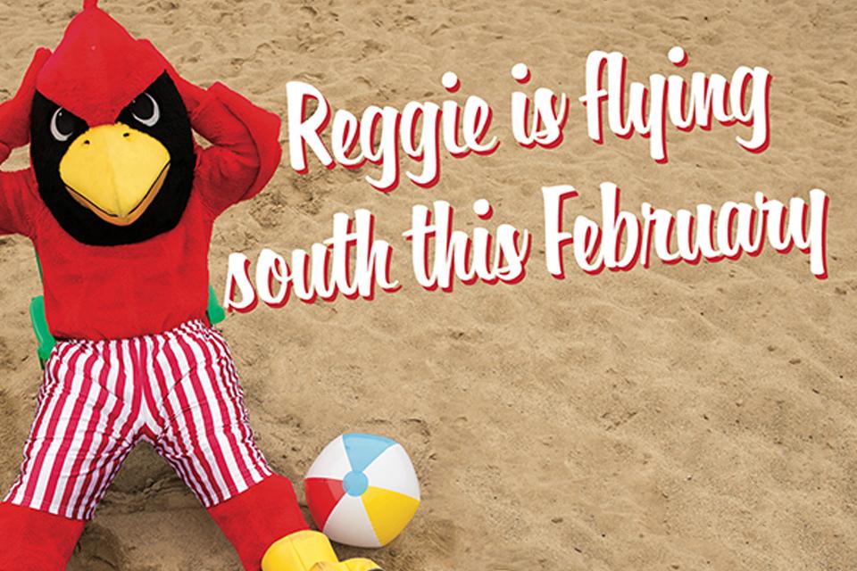 Reggie Redbird on a beach