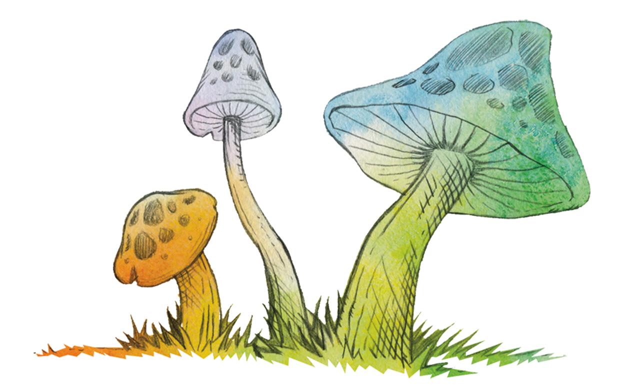 Mushrooms children's literature