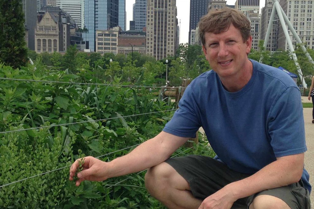 Professor John Sedbrook with pennycress at Millenium Park in Chicago.