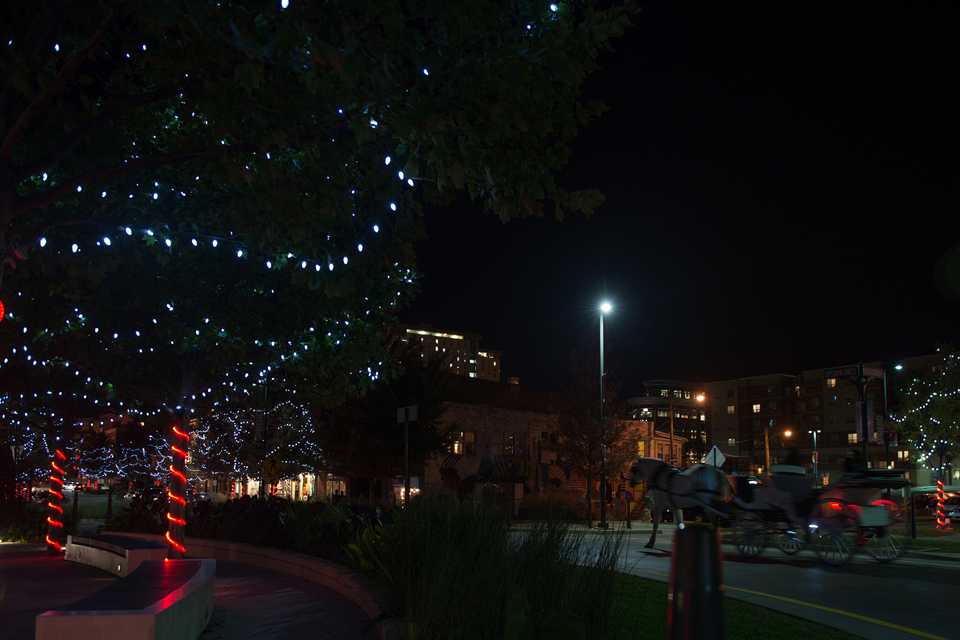 trees lit with horse carriage in background