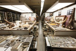 Paleontology collection