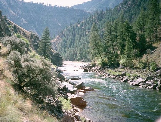 Wilderness background with a creek and trees