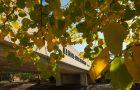 View through trees of Illinois State bridge