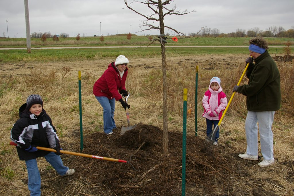 A family of four shoveling dirt around a young tree