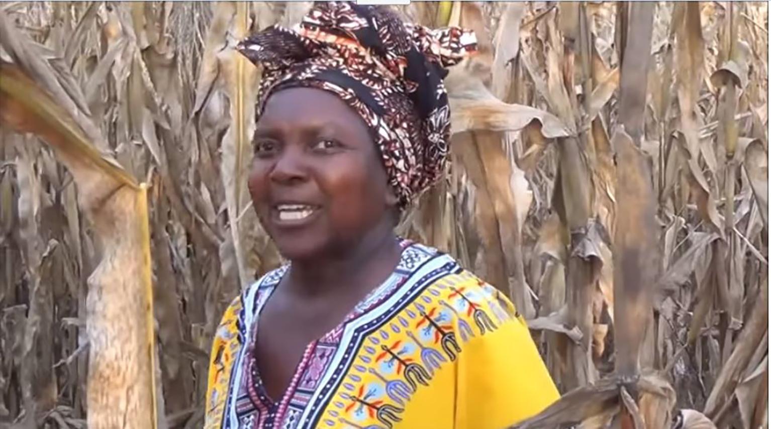 woman speaking in a corn field.