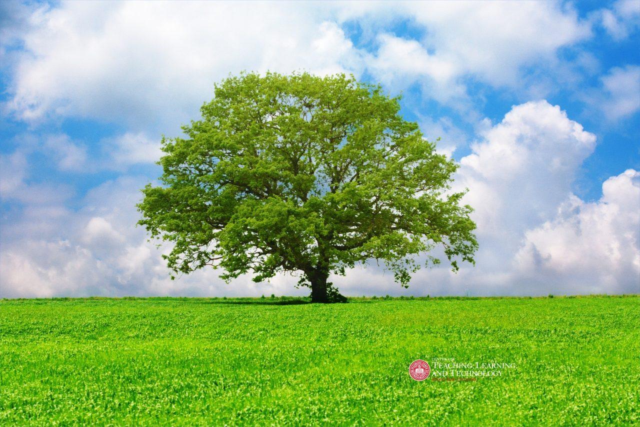 Tree in a beautiful meadow