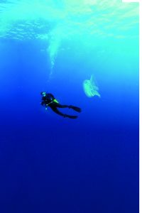 A woman diving in the ocean near jellyfish