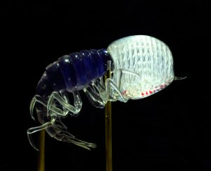 A four-eyed creature resembling a shrimp.
