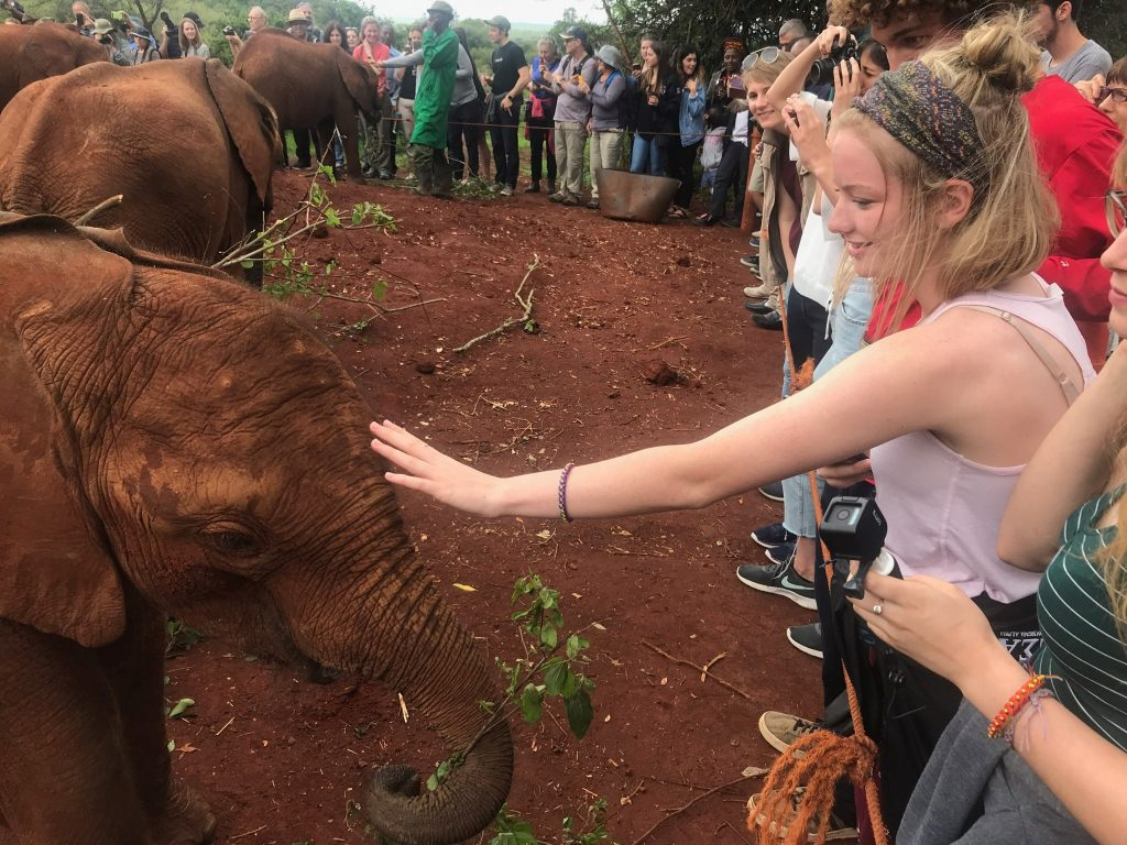 Illinois State student pets baby elephant in Kenya.