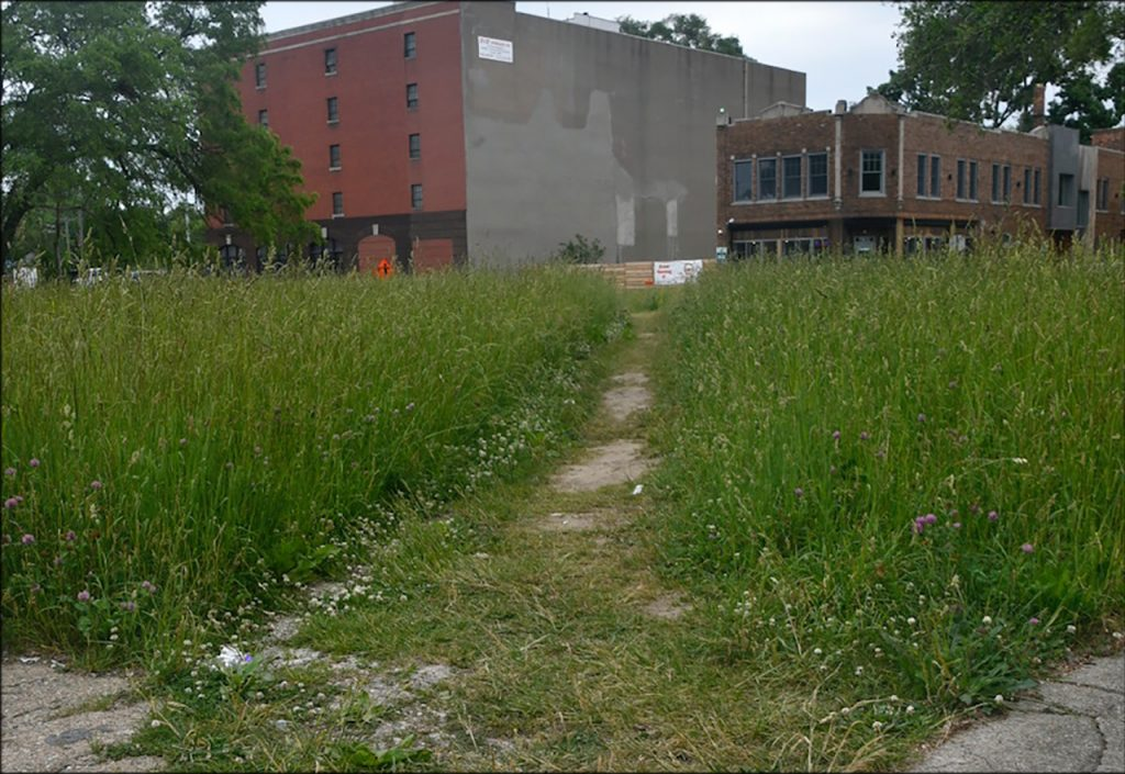 overgrown weeds with a trail down the middle and buildings in the distance