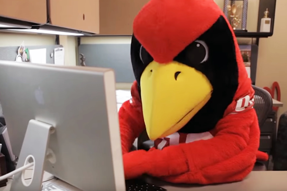 Redbird mascot at computer