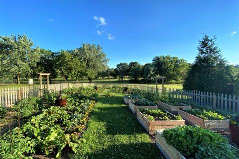 The ISU Horticulture Center's vegetable garden