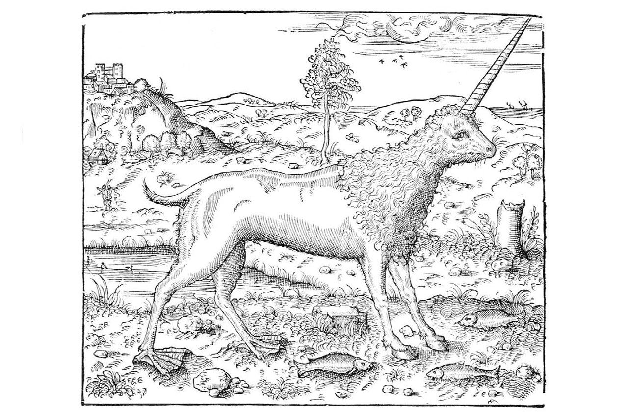 Camphur illustration