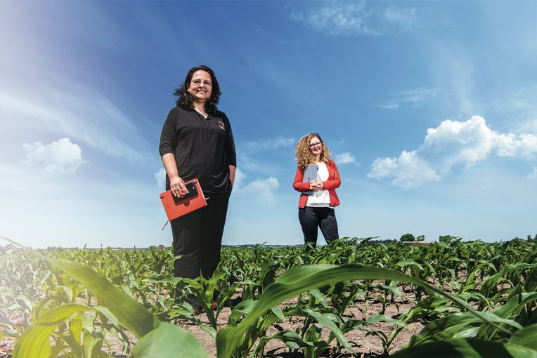 Two Agriculture professors standing in a corn field