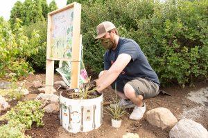 Christian Ekhoff plants a drumstick plant