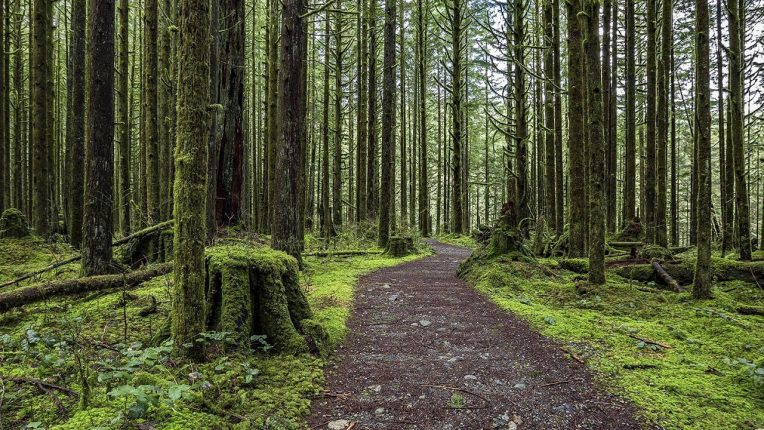 Picture of a trail in a forest