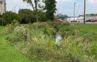 ISU Sugar Creek Savanna