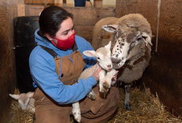 Graduate student Julissa Navarette '19 holds a newborn at the University Farm.