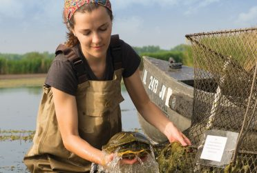 Redbird Scholar fall 2015 female biologist pulling a turtle out of the water cover textless