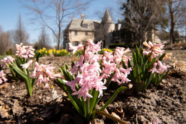 Illinois State's Ewing Cultural Center in the spring