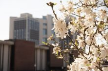 Flowering tree in foreground with Watterson Towers residence hall in background