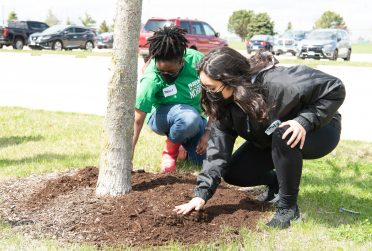 two students spreading mulch around a tree