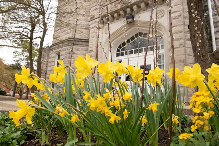 Flowers in front of Cook Hall