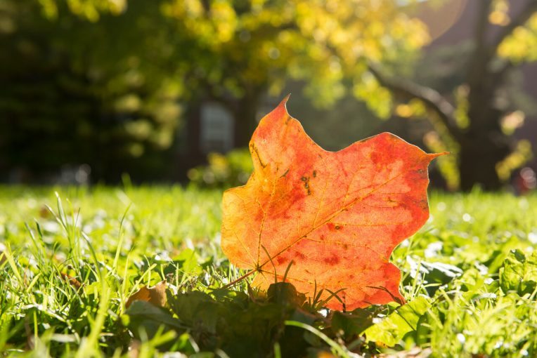 An image of an orange fallen leaf on the ground.