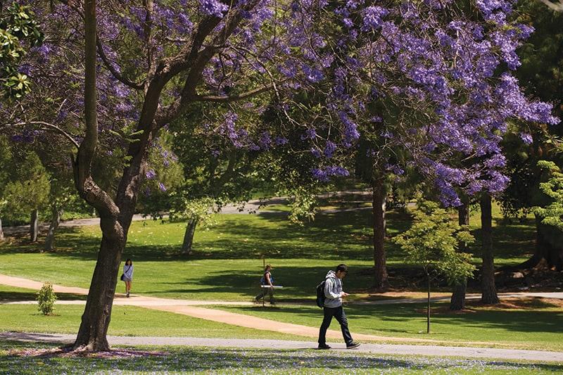 Aldrich-Park-Trees