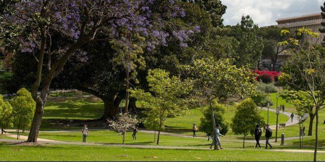 Aldrich Park, UCI  photo: Steve Zylius/UCI