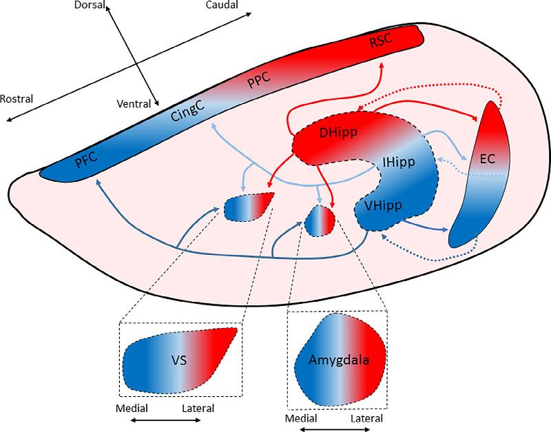 Neurobiology Review: Skelin, et al.