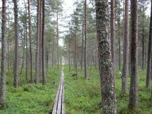 Hyytiälä, Finland